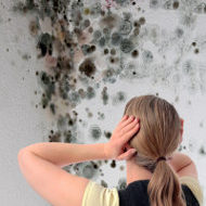 mould removal companies