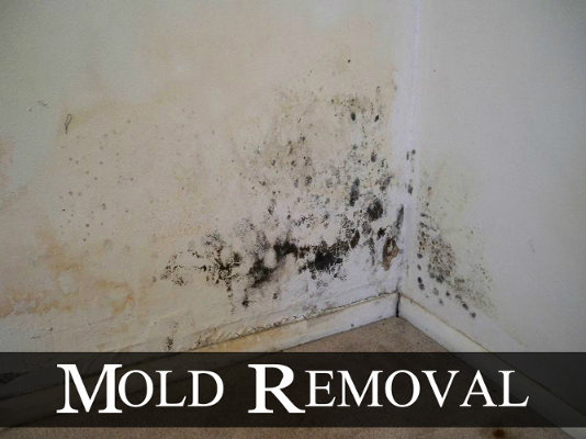 removing mould
