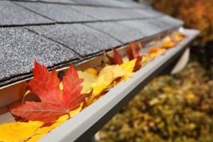 gutter full of leaves