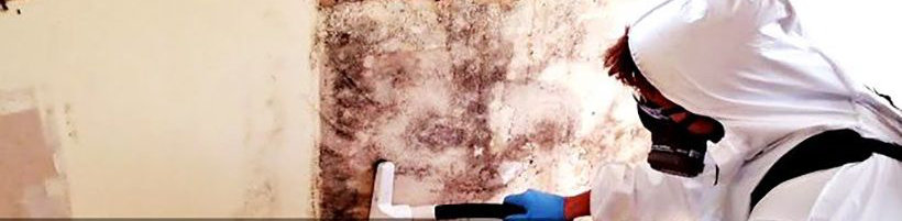 mould removal melbourne professional